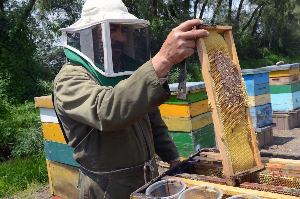 El trabajo de la apicultura es muy importante para muchas personas en el país