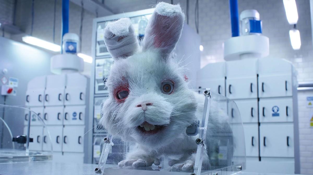 castigo por pruebas cosméticas en animales