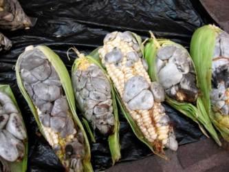 El hitlacoche es muy comun en los pueblos mexicanos, es un alimento que tiene muchos beneficios