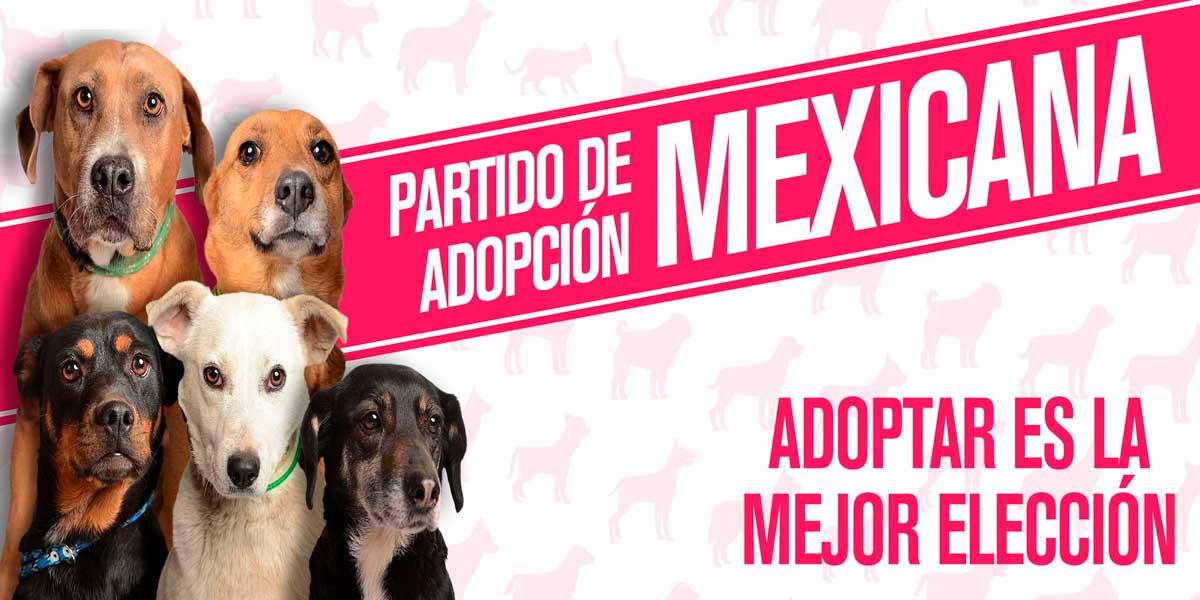 Partido Adopción Mexicana es una iniciativa para adoptar mascotas