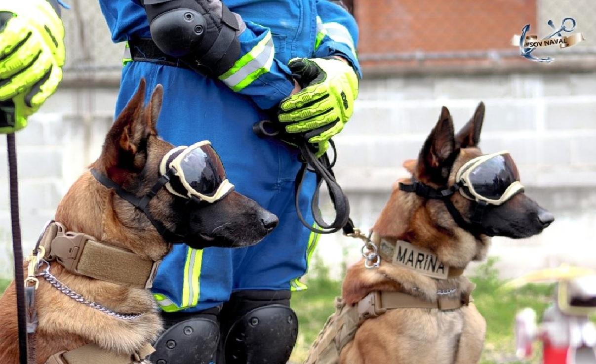Ecko y Evil son los perros rescatista y héroes de la línea 12 del metro