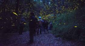 santuario de las luciernagas ya se puede volver a visitar