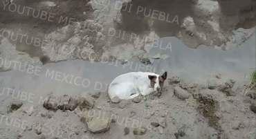 un perro más atrapado en socavón de puebla