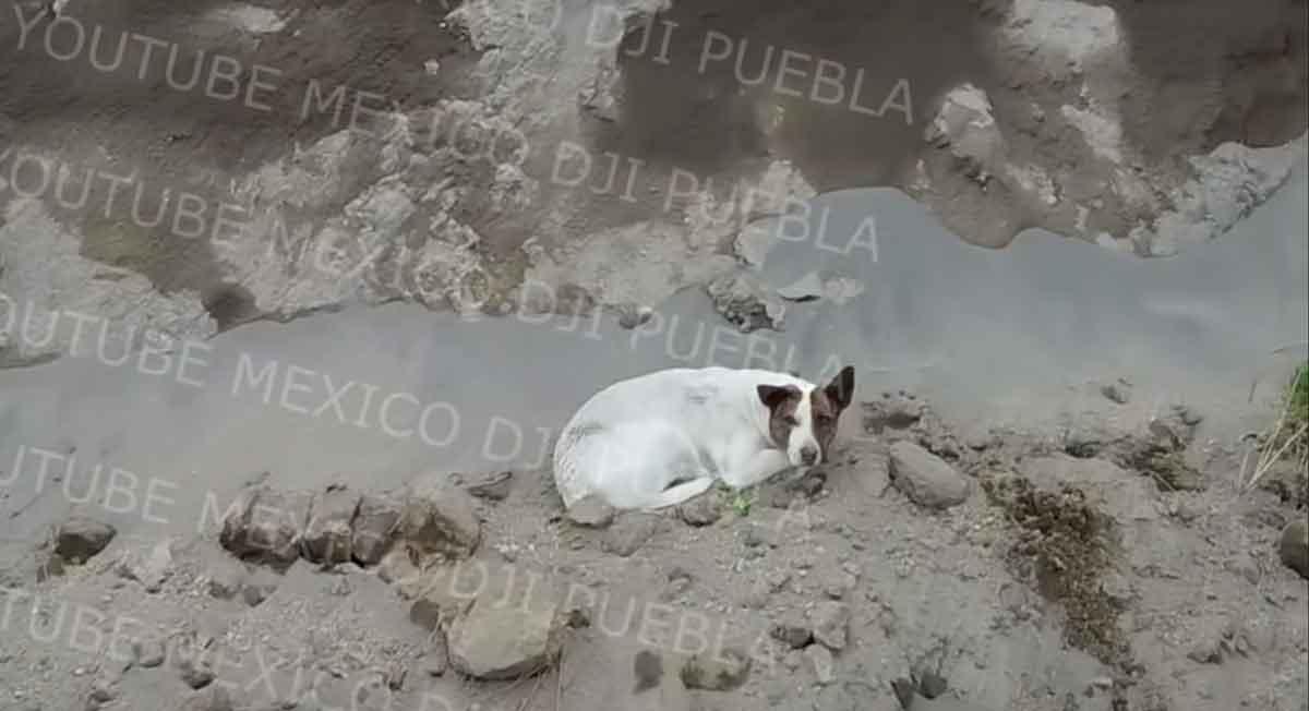 Socavón Puebla: Video de un tercer perrito atrapado