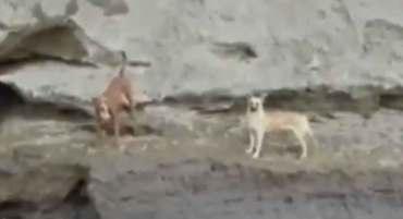 Un par de mascotas permanecen atrapadas en socavón de puebla