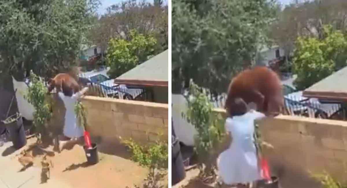 Video del momento en que joven rescata a mascotas de inmenso oso
