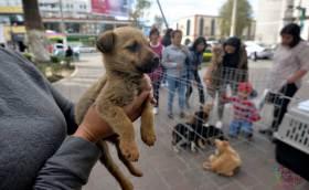 Asociación invita a adoptar perros de la Central de Abastos de Toluca