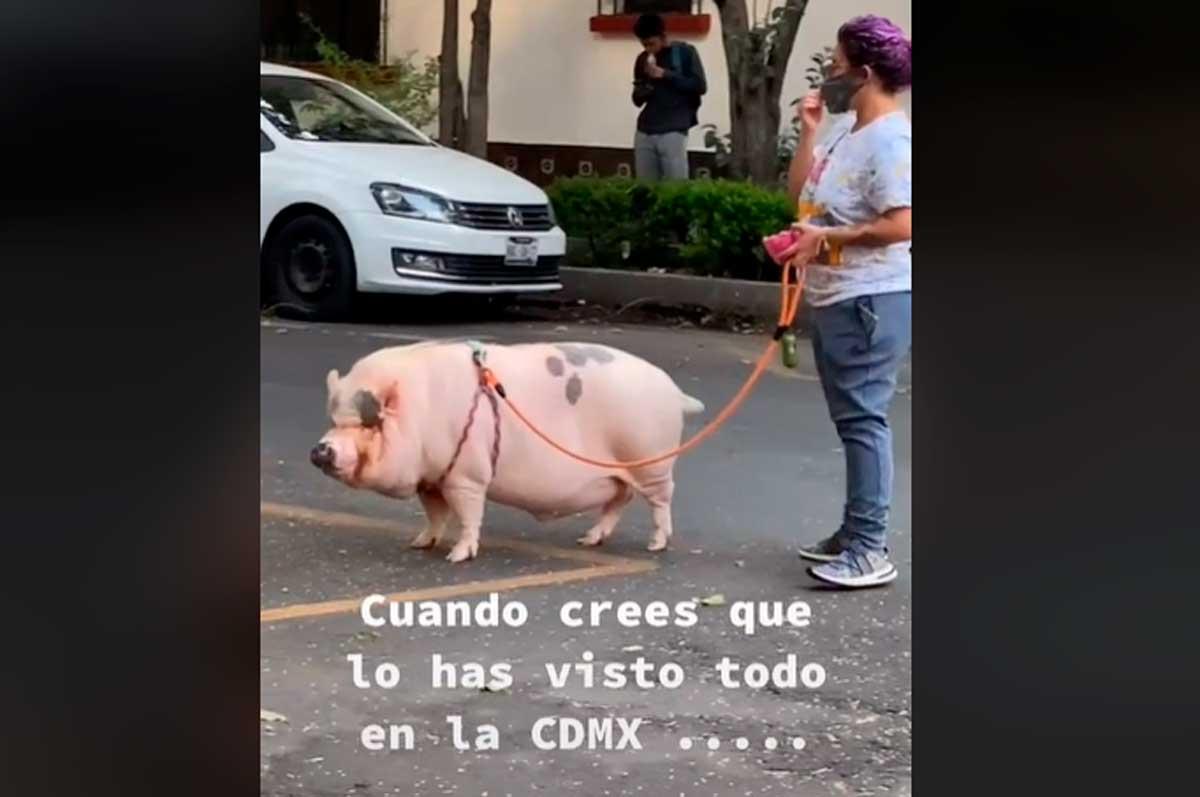 Mujer de la CDMX es captada paseando a su mascota ¡Un cerdo!