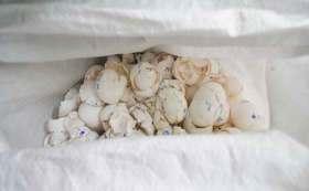 Cascarones de huevo en costal.