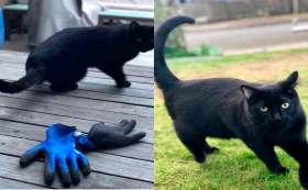 Dueña exhibe a su gatito por ladrón.