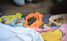 Gatitos recién esterilizados campaña Toluca.