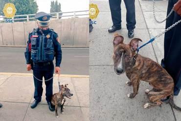Policía adopta a perrito abandonado después de rescatarlo