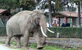 Elefante del Zoológico de Zacango.