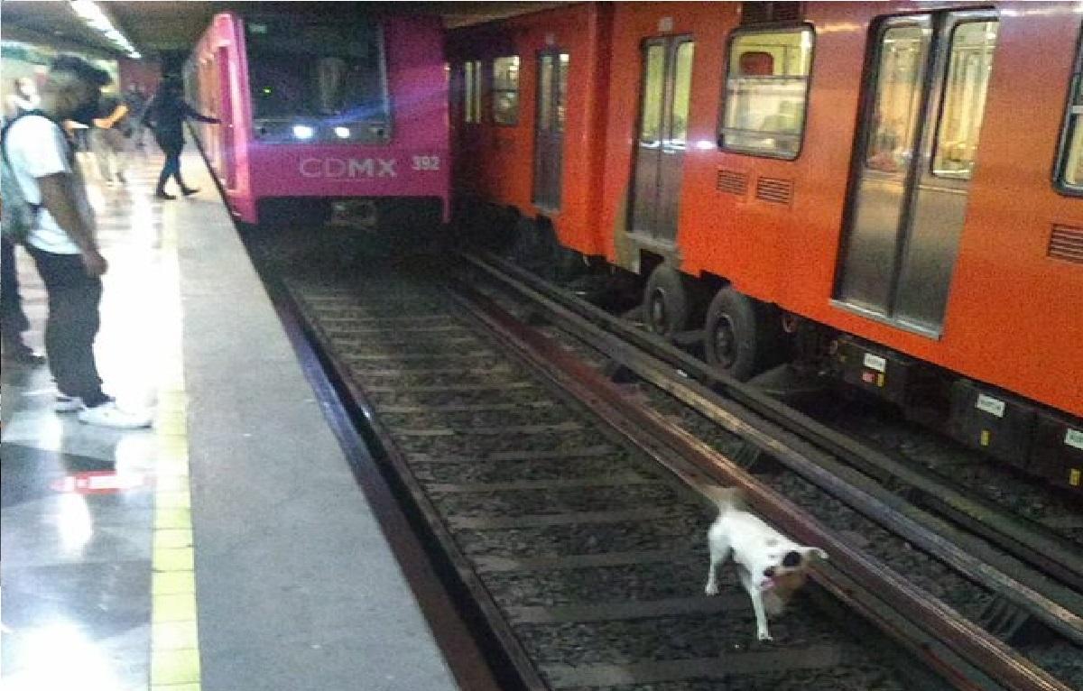 elementos del Metro de CDMX ayudaron a rescatar a un perrito de las vías