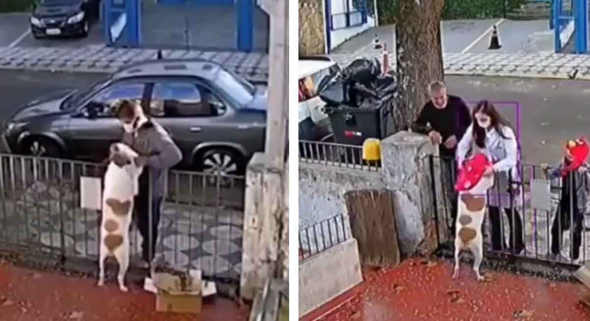 video viral del perrito quel e quitaro nsu abrigo y familia le da uno nuevo