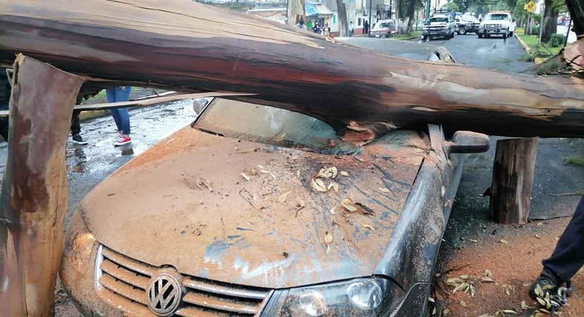 zinacantepec noticias, cae árbol en dos automóviles