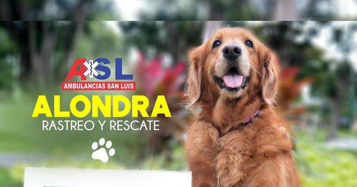 Perdió la vida Alondra, perrita rescatista del sismo del 2017