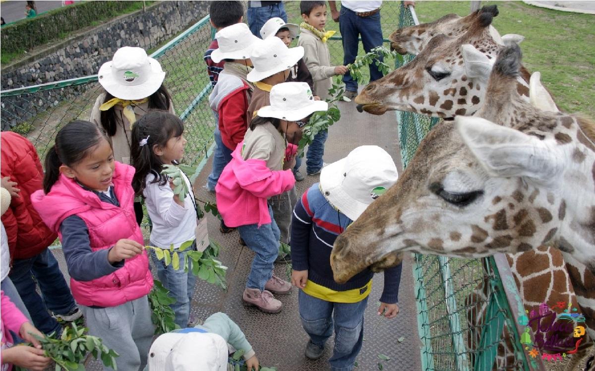 el zoologico de zacango ofertará un curso de verano 2021 para niños y niñas de 6 a 11 años de edad