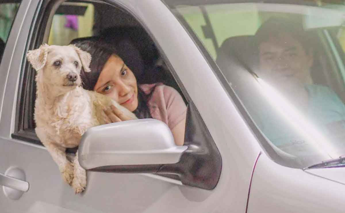 Día del perro ¿por qué se celebra el 21 de julio?