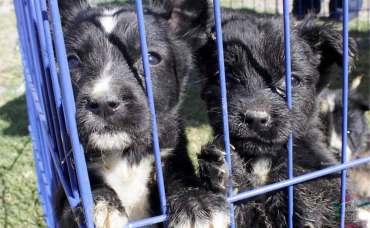 Animalitos en una jaula. Edomex aplicará penas de hasta 6 años de cárcel a quien maltrate a un animalito.