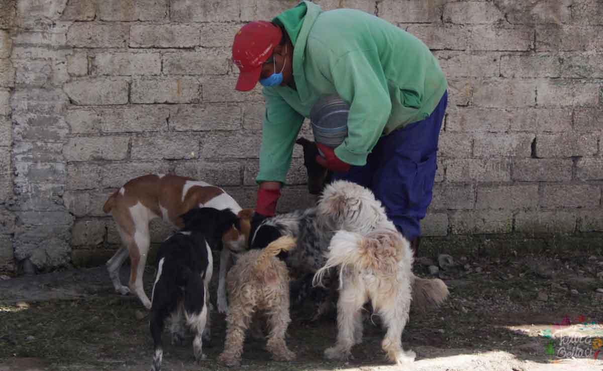 Persona alimentando a un grupo de perritos. Edomex aplicará penas de hasta 6 años de cárcel a quien maltrate a un animalito.
