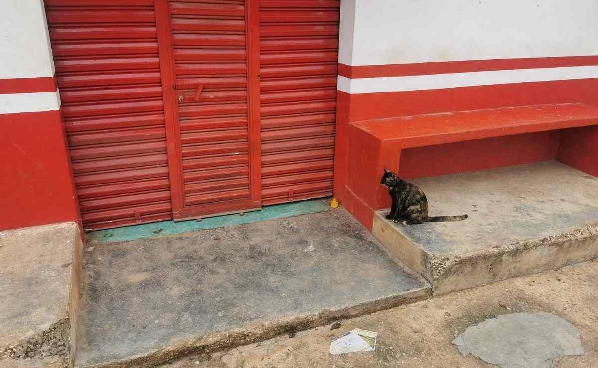 Gato se hace viral por esperar a su dueño fallecido afuera de una tienda