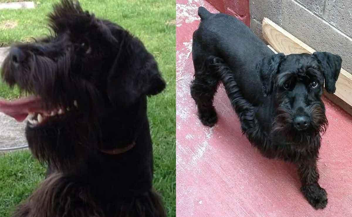 Llevan a perrito a bañar a la veterinaria y pierde la vida: Dueños exigen justicia en Edomex