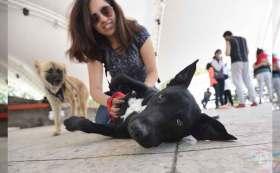 Estos son los mejores lugares para consentir a tu perrito en Toluca.