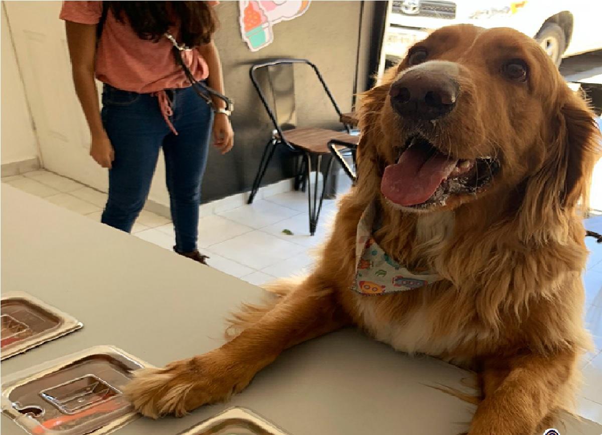 ¿En dónde puedo comprar postres para mis perros en Toluca?