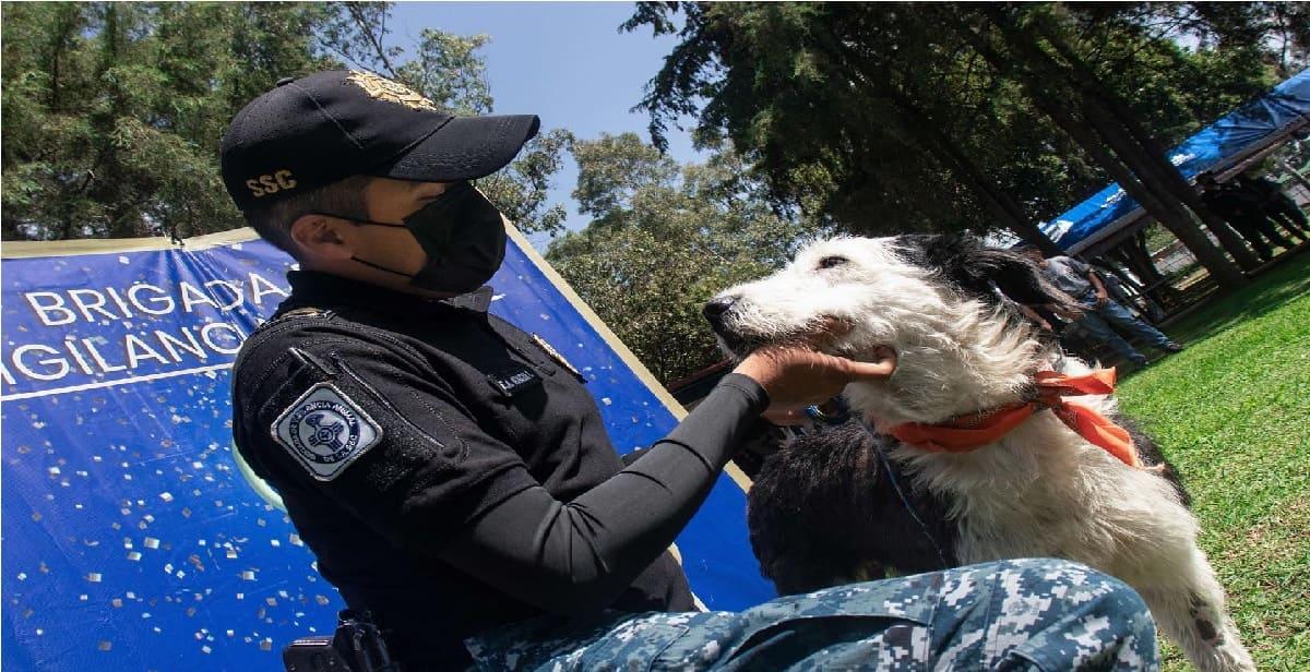 SSC cumple 16 años de rescatar y adoptar perritos maltratados