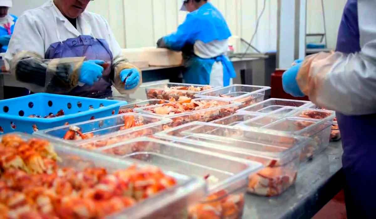 Empresa en canadiense ofrece vacantes para laborar en planta pesquera con sueldos de hasta 36 mil pesos mensuales