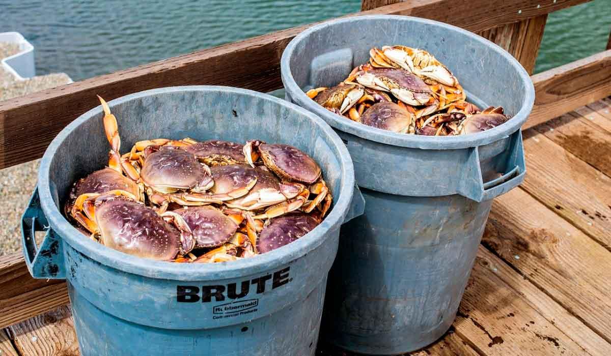 Empresa en canada ofrece vacantes para laborar en planta pesquera y de mariscos