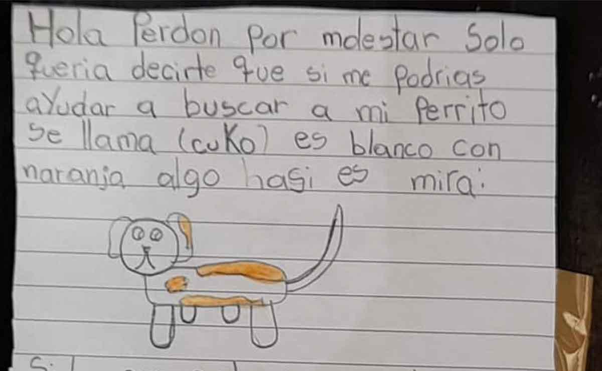 Niña busca a su perrito chihuahua perdido con un tierno dibujo y se vuelve viral