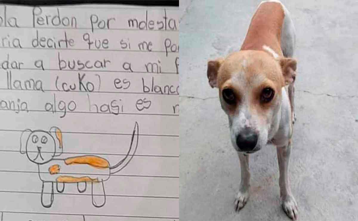 Niña hace dibujo de su perrito perdido.
