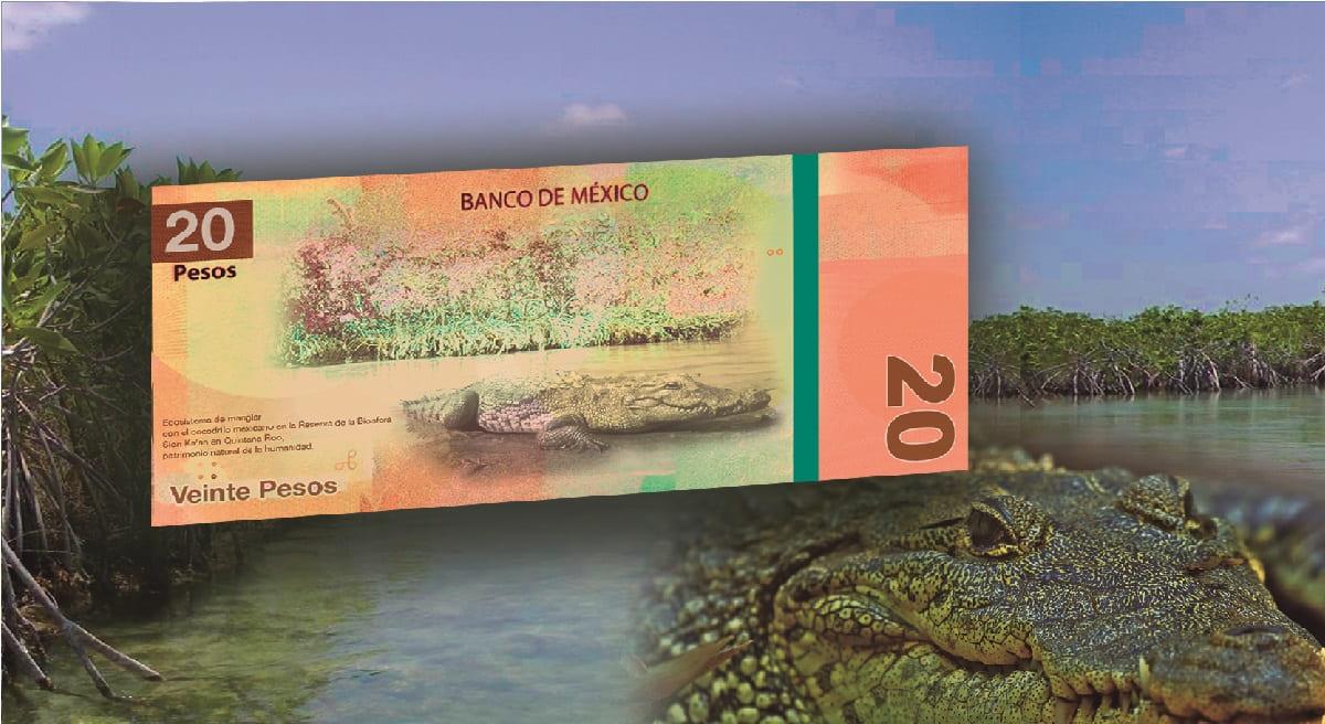 Así serán los nuevos billetes de 20 y 50 pesos que tendrá México