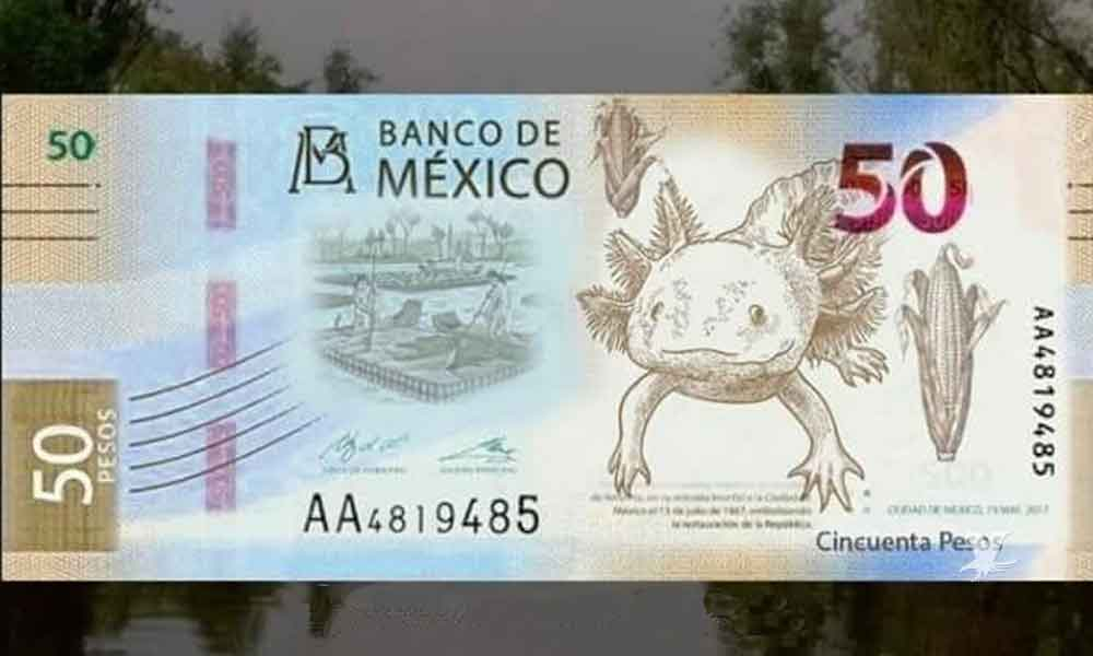 nuevo billete de 50 pesos de banxico