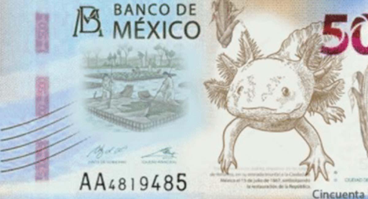Nuevos billetes de 20 y 50 pesos, ¿cuándo serán puestos en circulación?