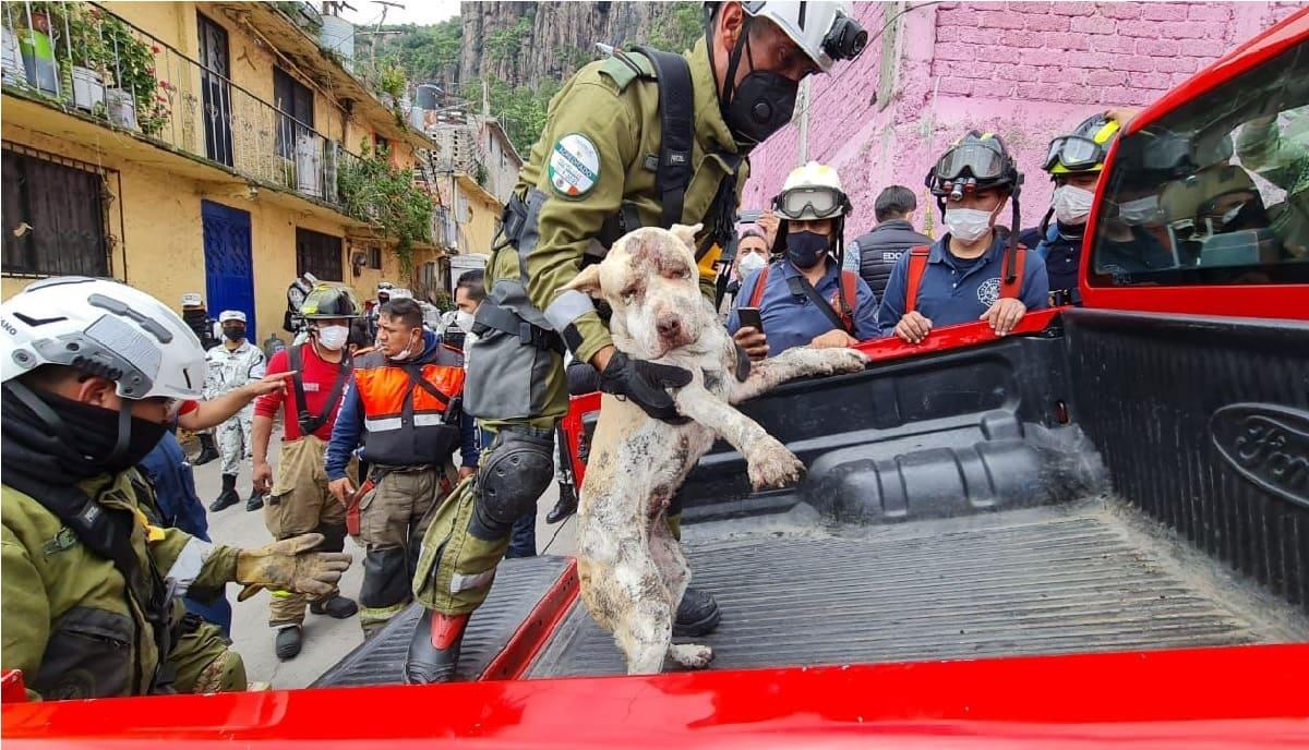 Rescatan a perrita de entre los escombros del cerro del Chiquihuite