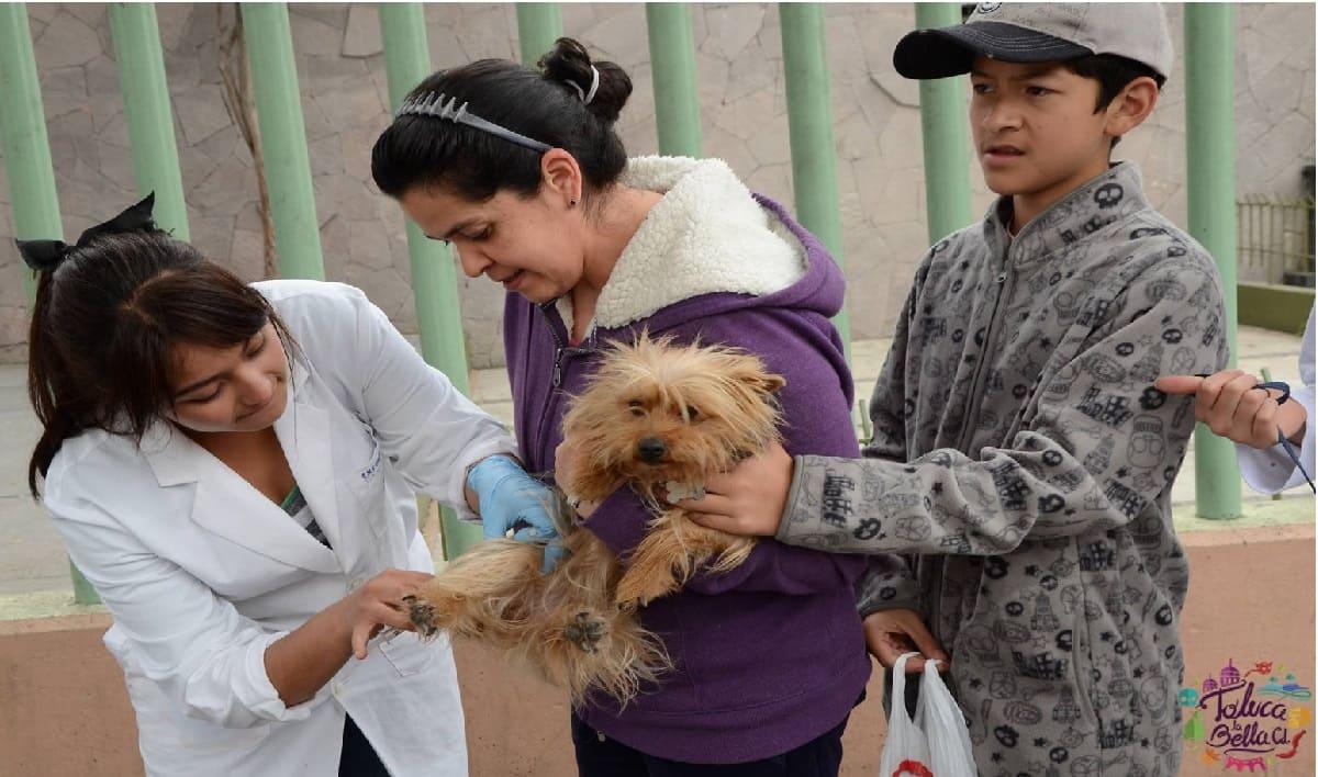 Toluca anuncia último día de vacunación antirrábica de manera gratuita