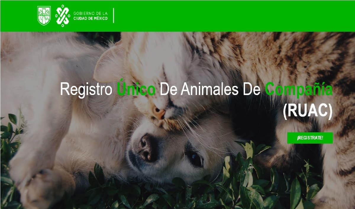 Conoce los pasos del Registro Único para Animales de Compañía (RUAC)