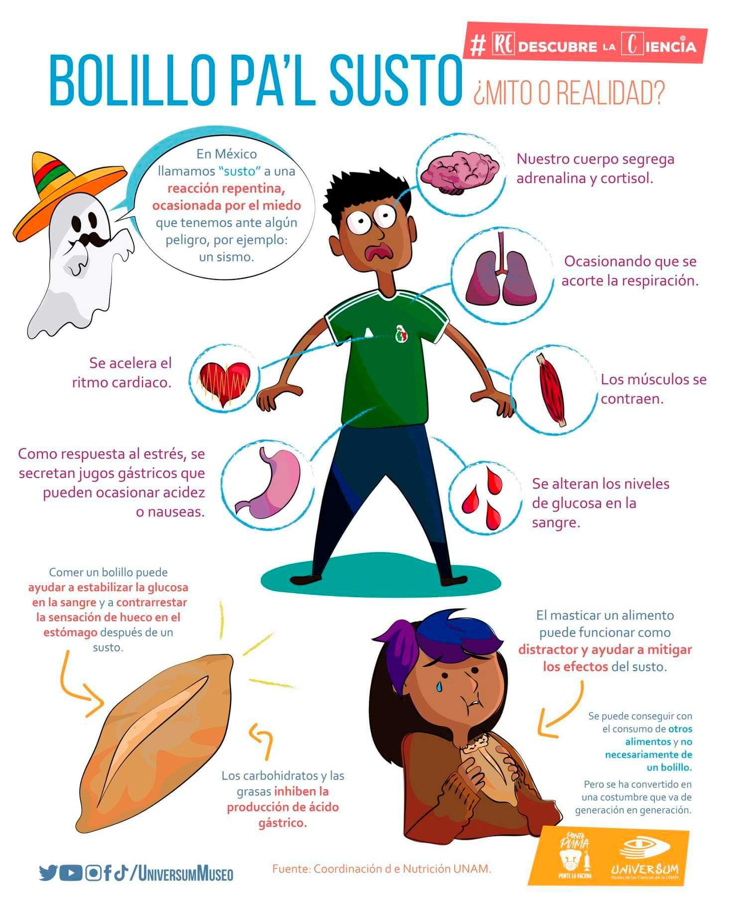 Datos curiosos sobre el bolillo, alimento típico y tradicional en México para curar el susto.