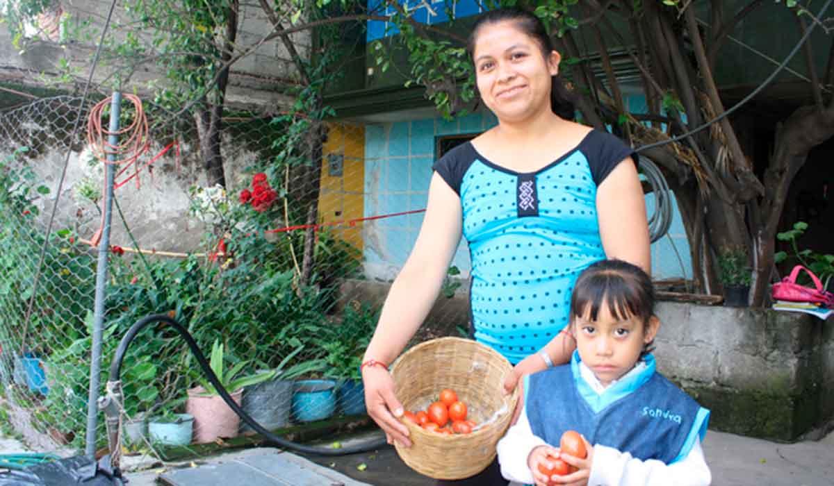 Huertos de Traspatio en Toluca: ¡El IMM te ayudará a tener uno en casa!