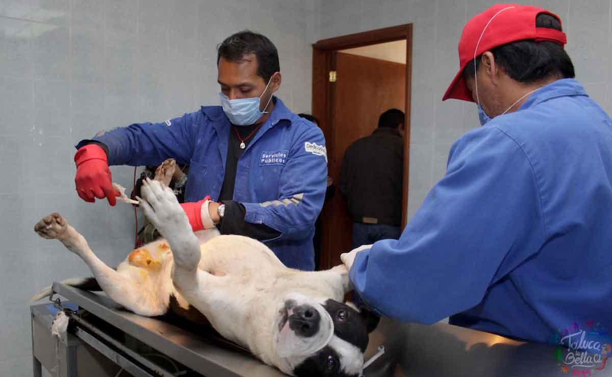 esterilización gratuita toluca
